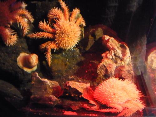 R1156342 はじめての、神奈川「新江ノ島水族館」 おかーさん深海生物が楽しみだった編