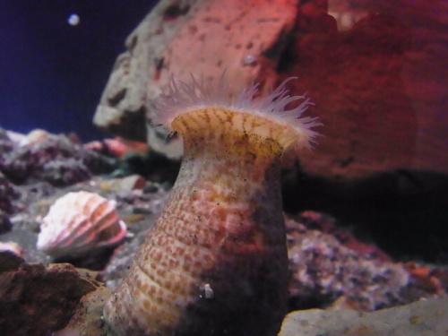 R1156352 はじめての、神奈川「新江ノ島水族館」 大人の個人的な楽しみ編