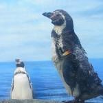 はじめての神奈川「新江ノ島水族館」深海生物が楽しみだった編