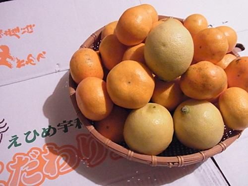 R1159030 愛媛県の宇和島みかんを楽天で買った