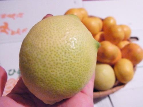 R1159031 愛媛県の宇和島みかんを楽天で買った