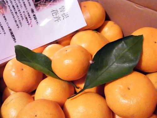 R1159104 香川三豊市の曽根花卉みかんは、この季節だけの味