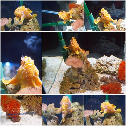 page-sui03 京都水族館で見た気になる生き物