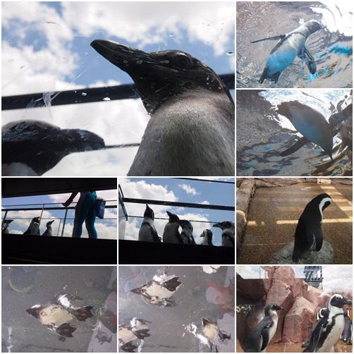 page-sui06 京都水族館のペンギンは頭の上にいる
